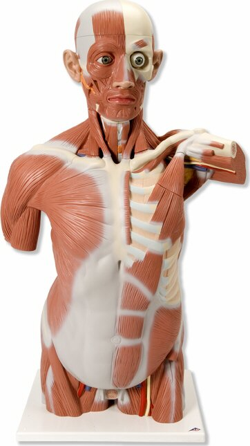Tecnoedu Anatomía Humana