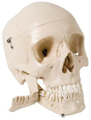 TecnoEdu - Odontologa
